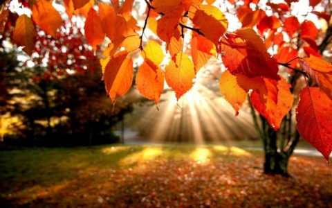 The Autumnal Equinox:  The Gateway of Balance and Transition